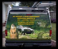 wildlife control, animal removal, wildlife removal