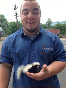 Baby Skunk Removal