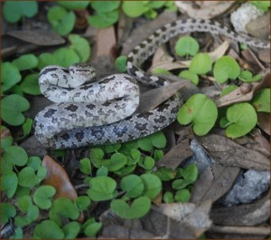 michigan snake control