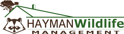 Hayman Wildlife Management