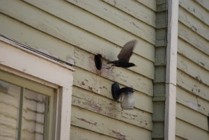 birds 063