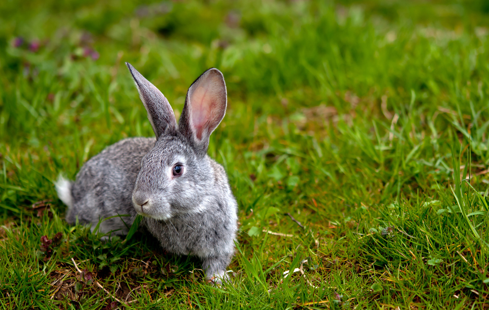 Rabbit Removal | Rabbit Control